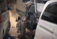 Leopard Attacks Safari Guide