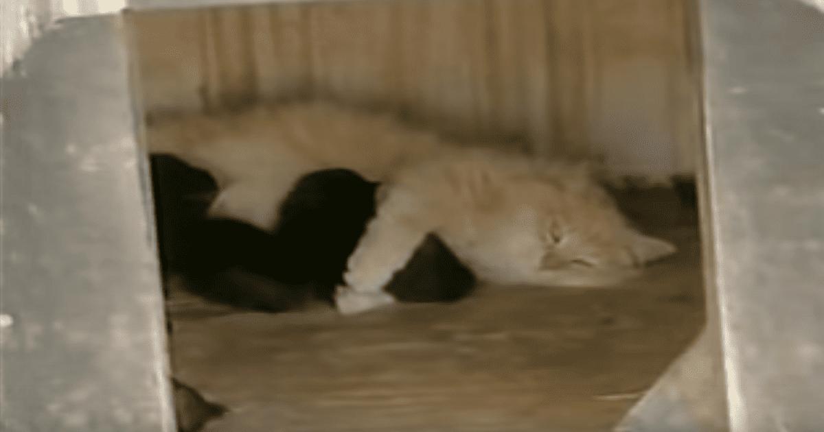 Cat Nurses Puppies