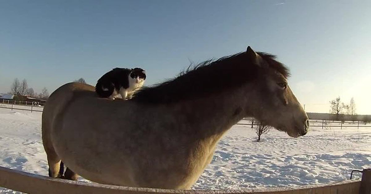 horse and cat friendship