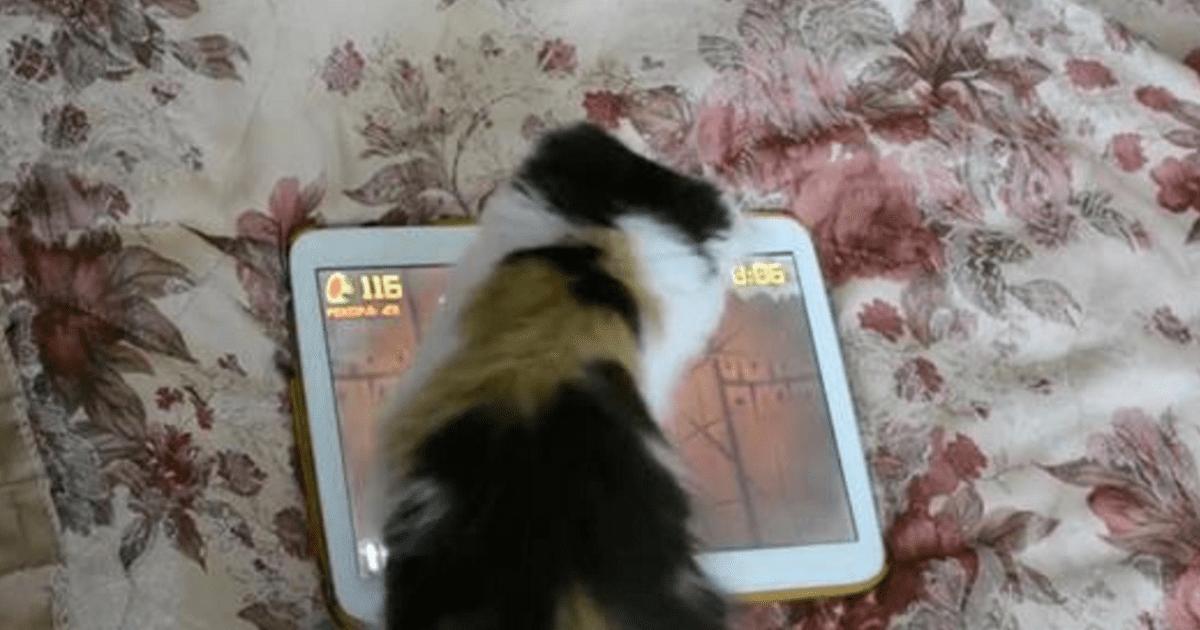 kitten plays tablet