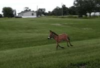 adorable mule video