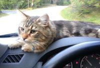 cat rescue video