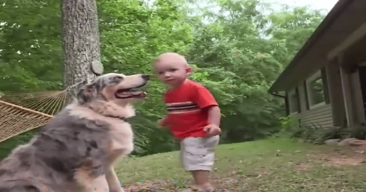 dog and baby video