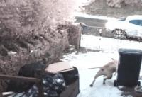 dogs caught thief