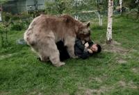 bear video