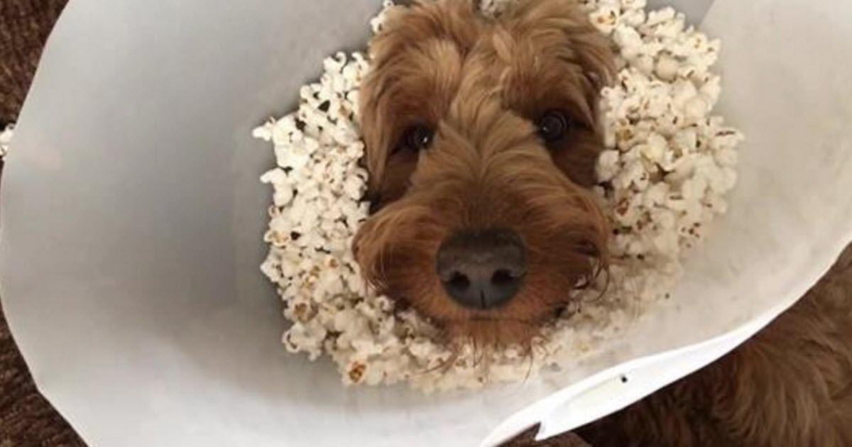 dog popcorn cone video