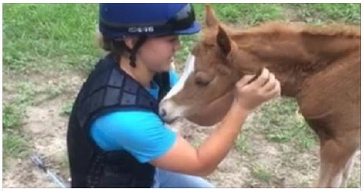 baby horses video