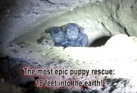 puppy rescue video