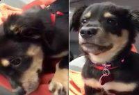 puppy tantrum video