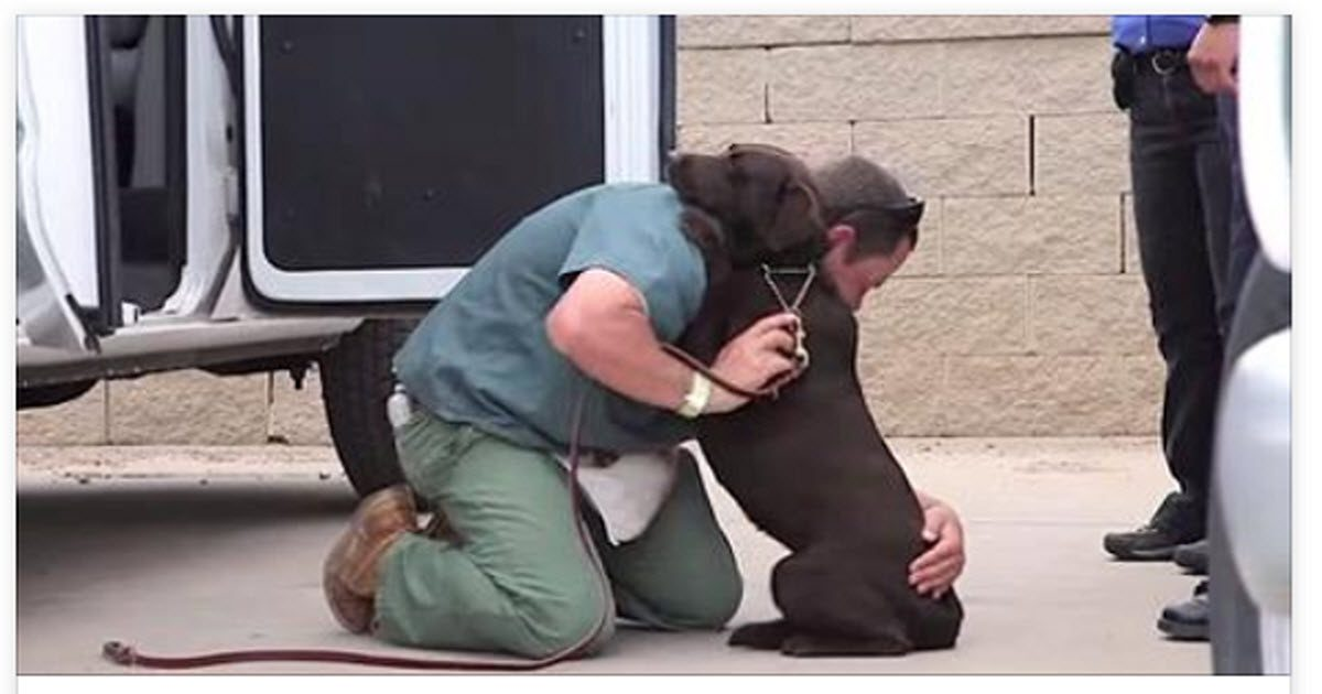 shelter dogs prison inmates video