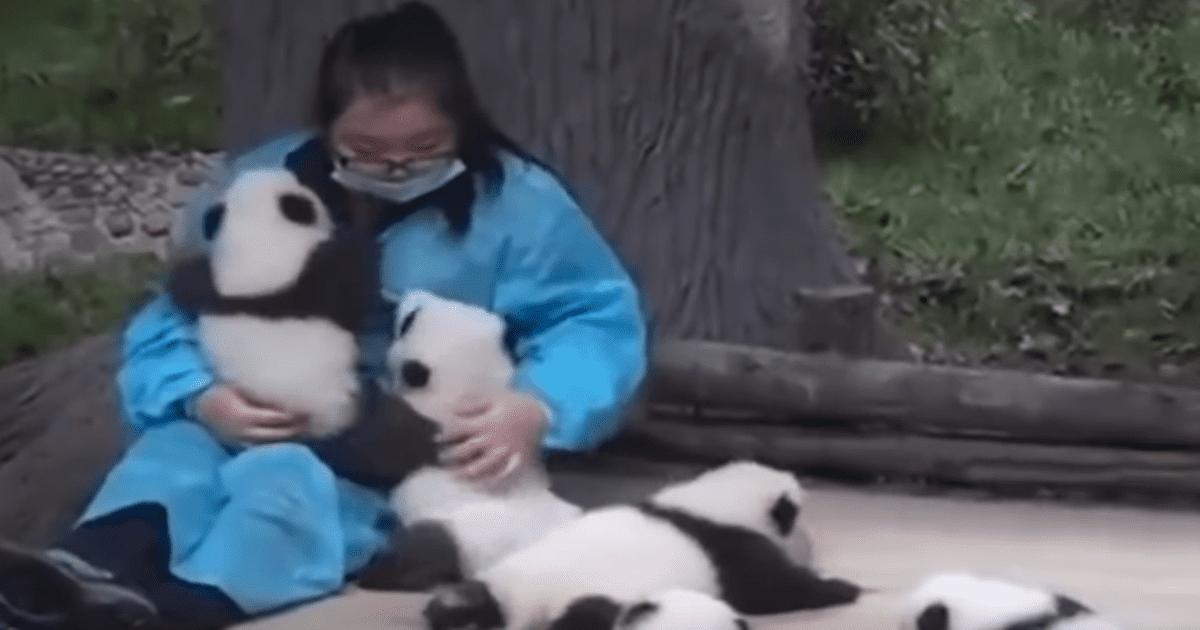 panda hugger video