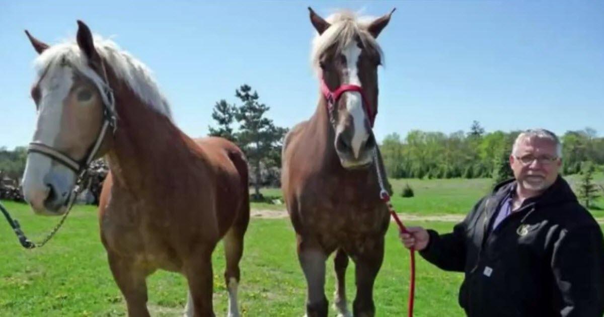 big jake horse video