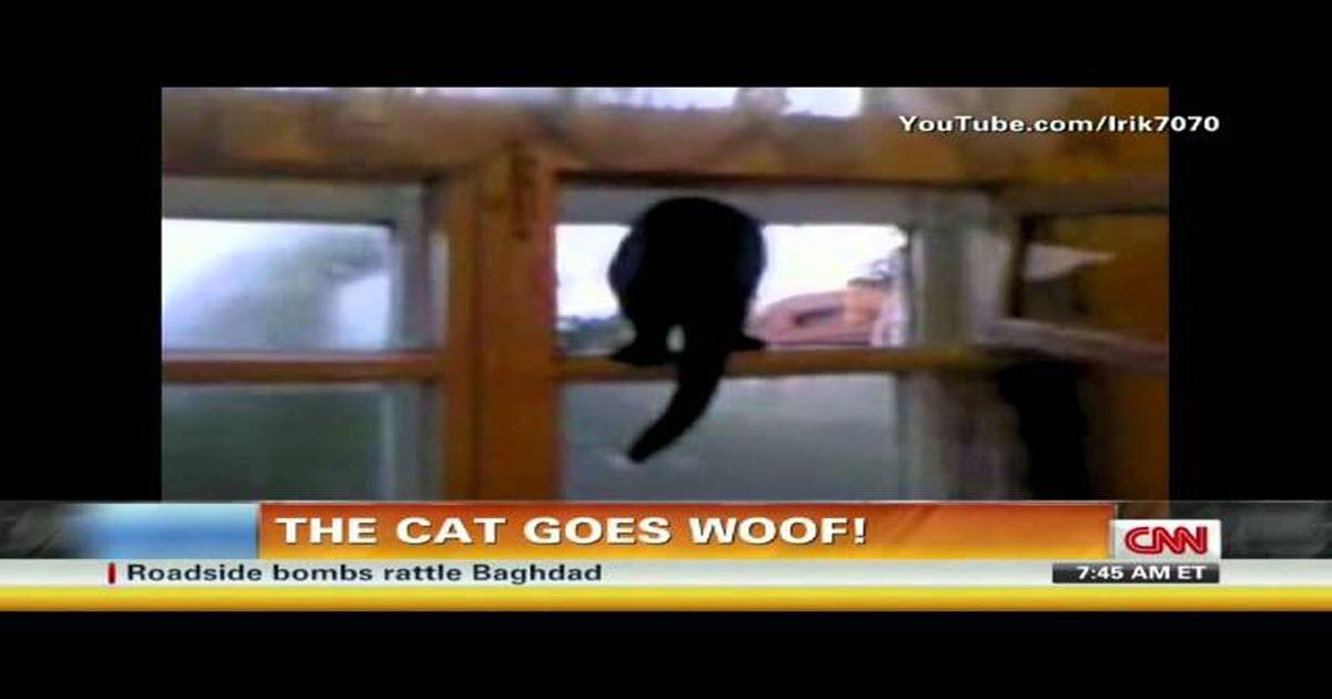 cat identity crisis video