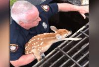 fawn rescue video