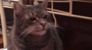 cat eating spaghetti video