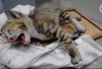 kittens story video