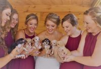 rescue puppy wedding bouquet video