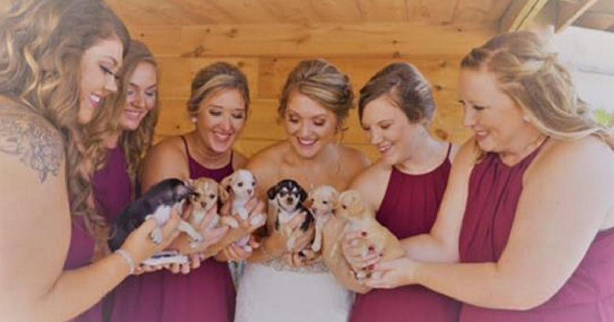 rescue puppy wedding bouquet video