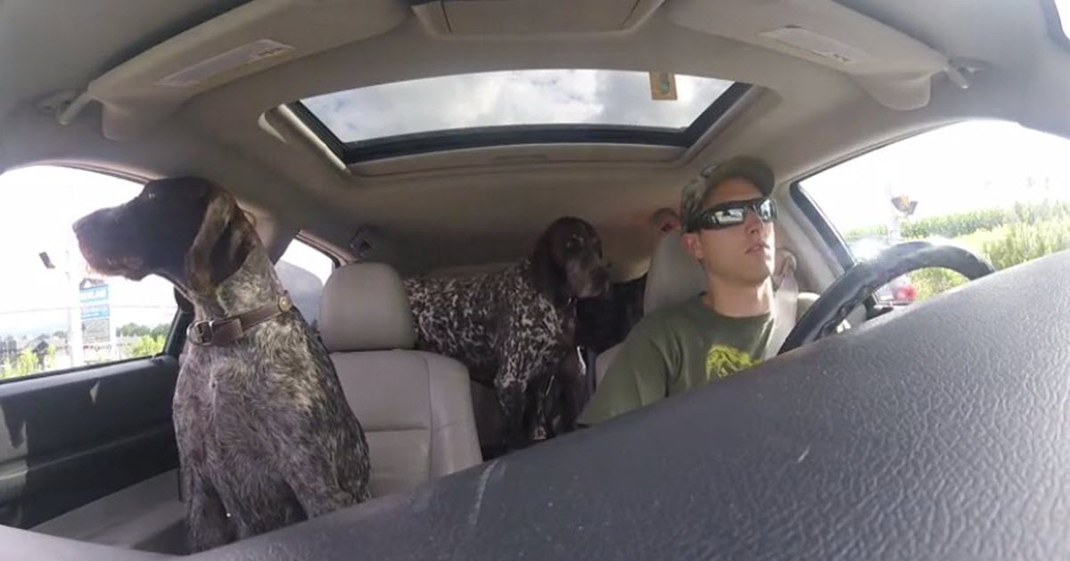 dogs riding in car video